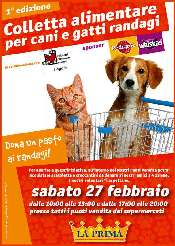 Colletta alimentare per cani e gatti a Foggia