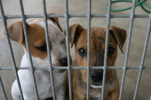 Cani abbandonati Foggia Tribunale di Foggia volontari protezione animali