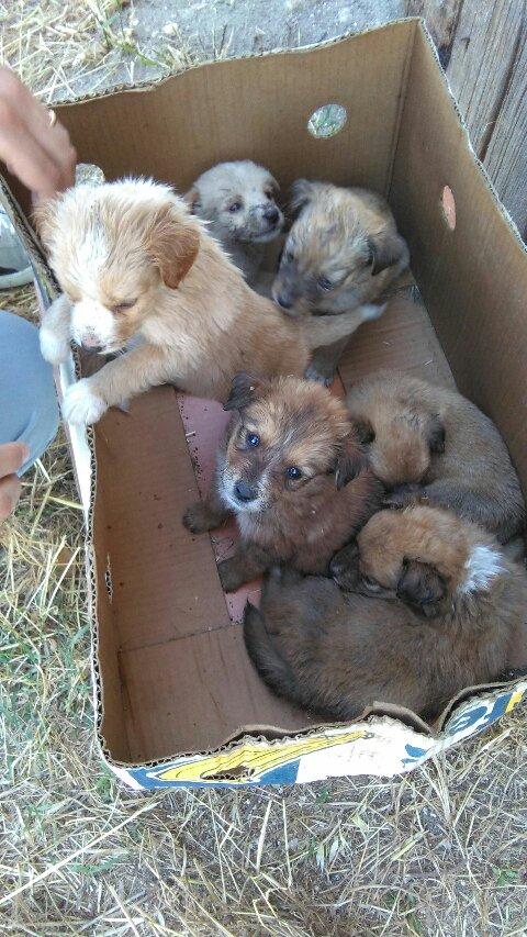 Sei cuccioli abbandonati in via Ascoli