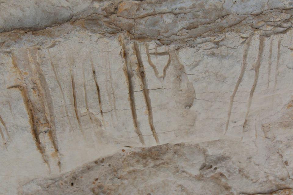 Figure 2 Riparo C