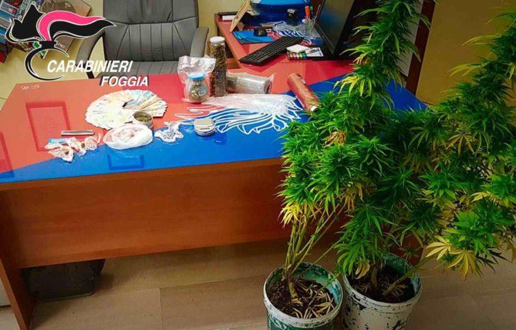 Arrestato Per Detenzione E Spaccio Di Marijuana