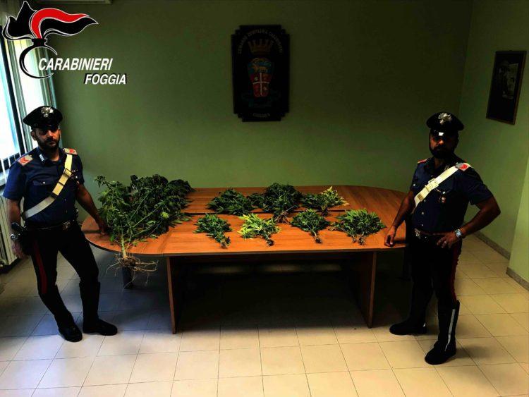 Cerignola Piantagione Marijuana