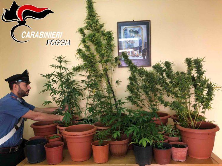 Marijuana Arrestato Pregiudicato1