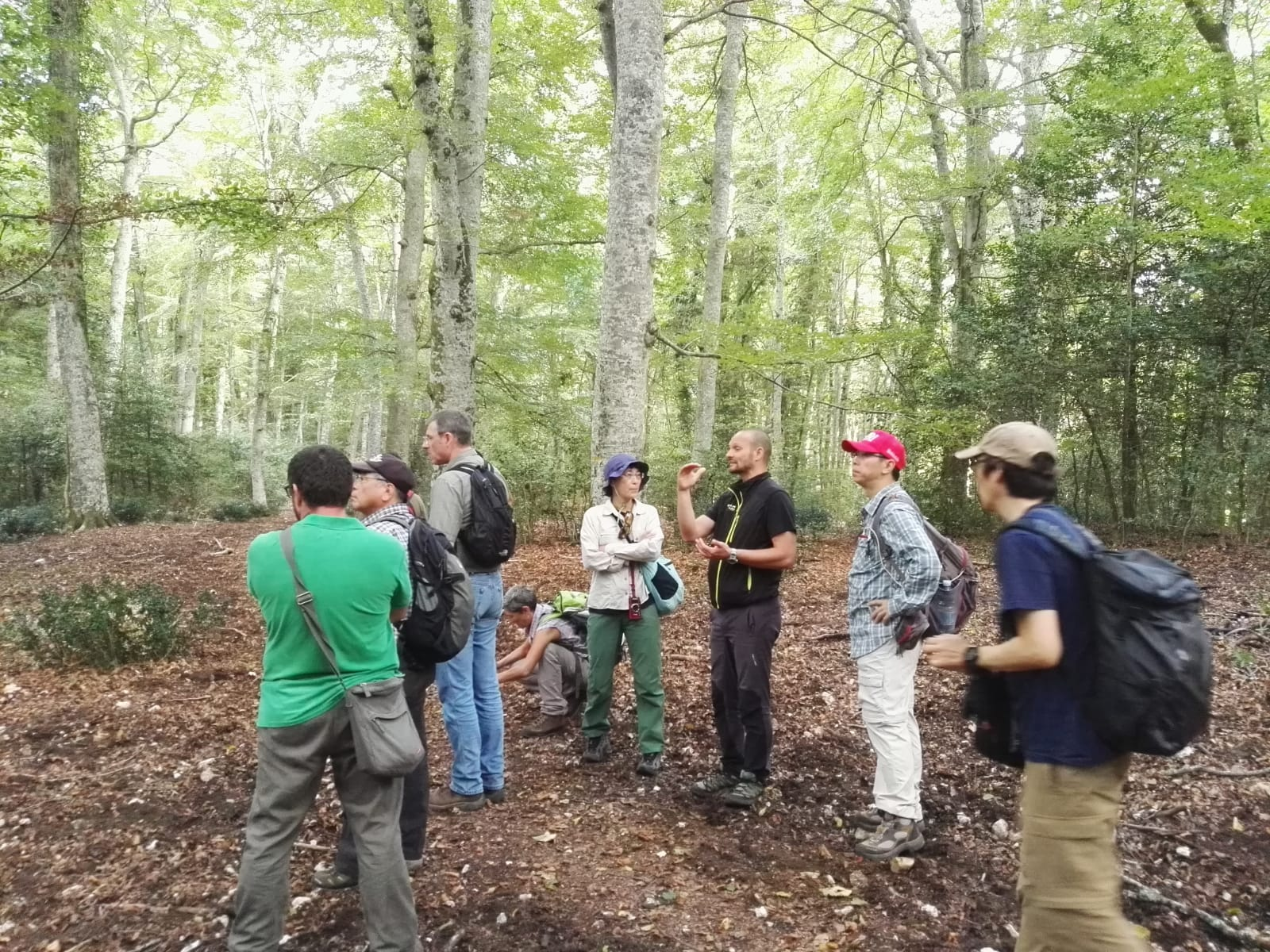 Faggete Unesco Foresta Umbra