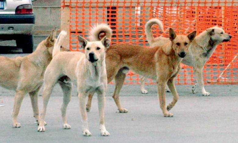 Cani Randagi Foggia
