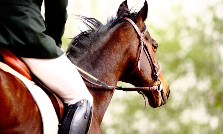 Foggia Open Day Equestre