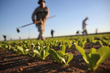 Dimissioni Di Gioia Pendinelli Agricoltura Puglia