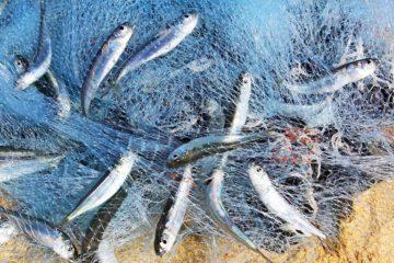 Blocco Pesca Manfredonia