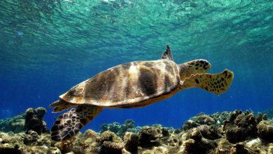 Photo of Tartarughe marine, la Puglia è tra le regioni con più nidi d'Italia