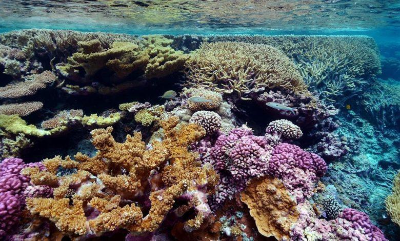 barriera corallina puglia