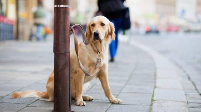 cani abbandonati puglia