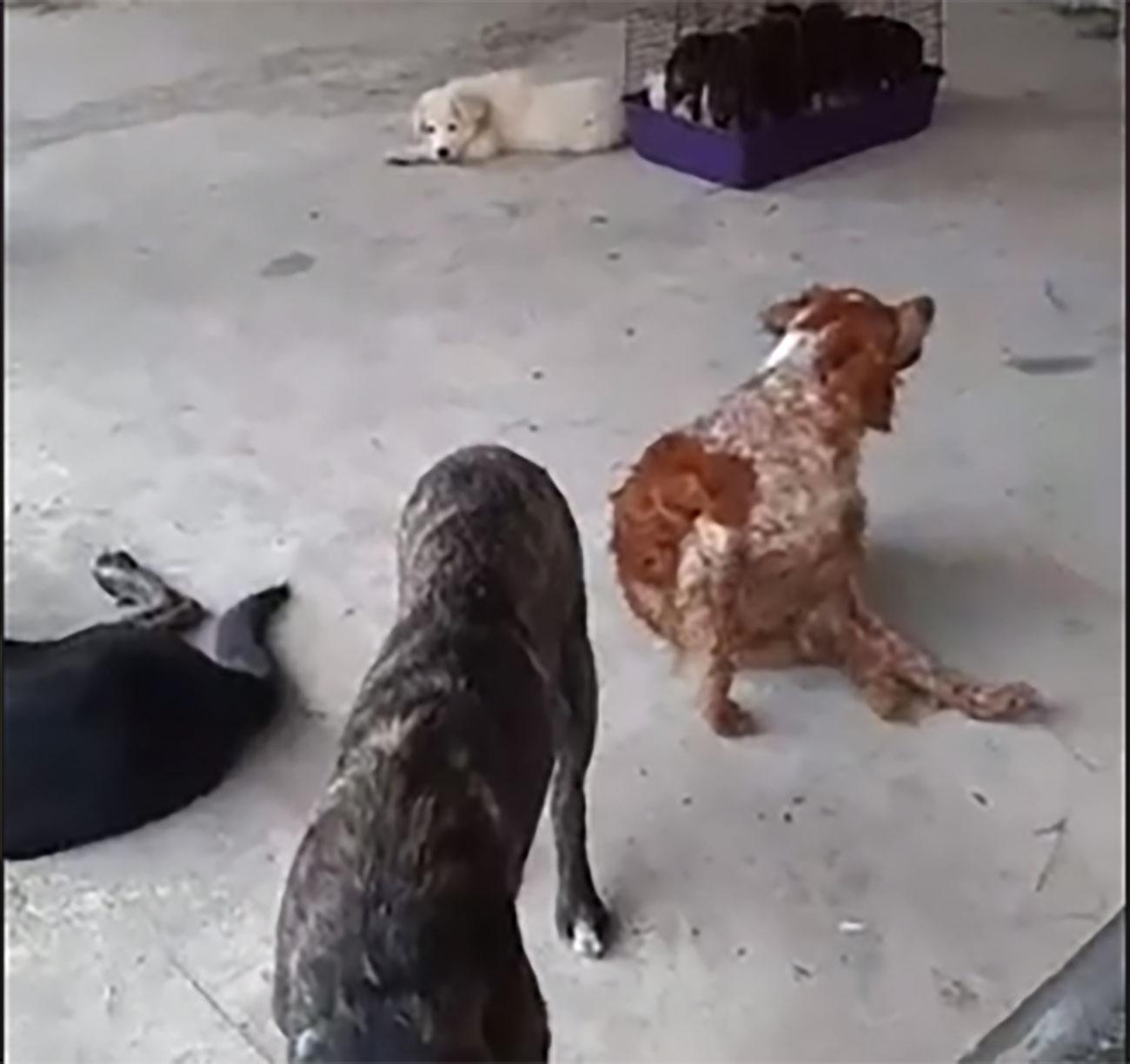 cani via petrarca