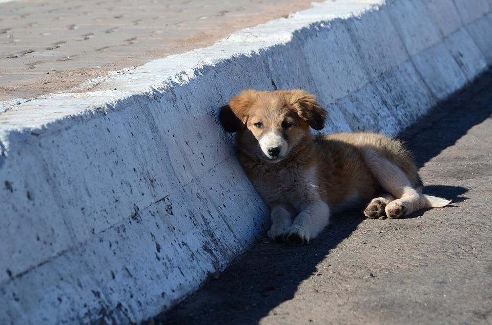 puglia cani abbandonati