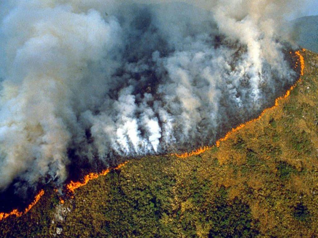 amazzonia incendi cosa possiamo fare