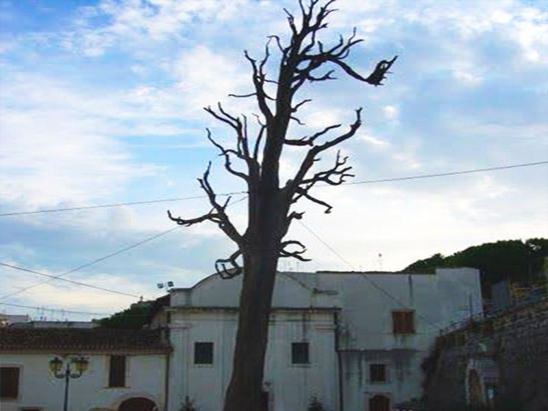 ischitella albero capovolto