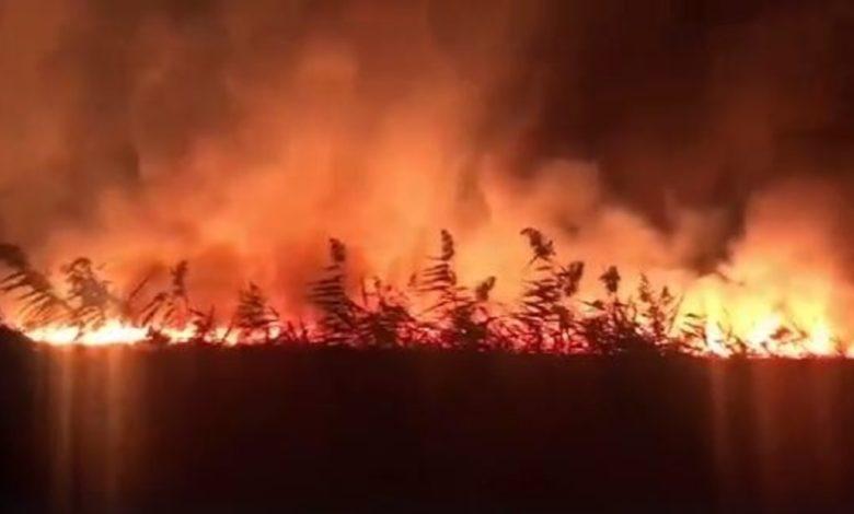 incendio-oasi-lago-salso