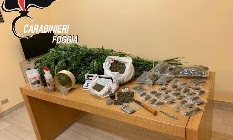 san-giovanni-rotondo-cannabis