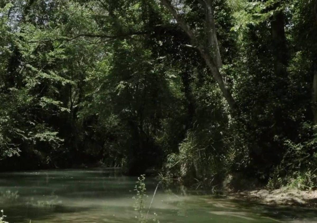 bosco-incoronata