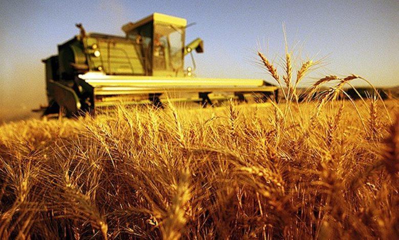 agricoltura-puglia