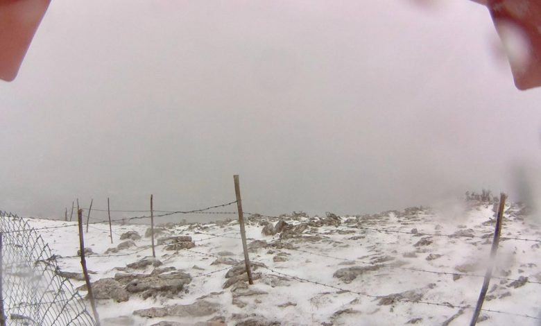 neve gargano
