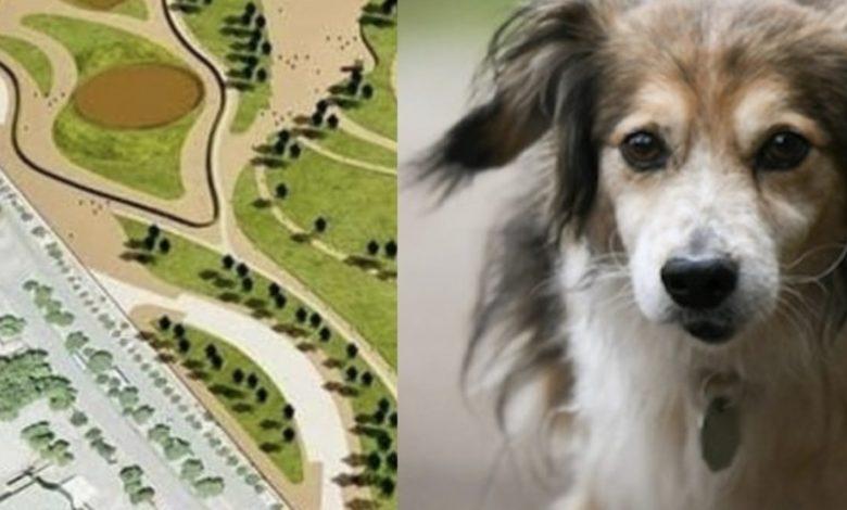 campi-diomedei-area-dog
