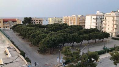 """Photo of """"Gli alberi sono un patrimonio da custodire"""", lanciata una petizione per salvare i 53 pini di Vieste"""