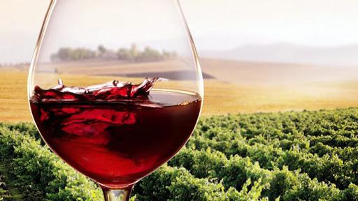 Photo of Il Tuccanese, quel pregiato vitigno rosso della Daunia ancora poco conosciuto