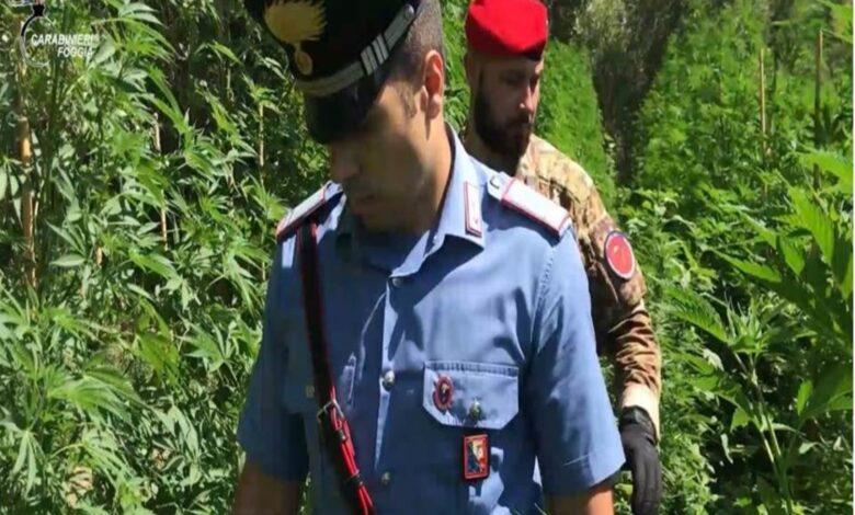 carabinieri-vico-del-gargano