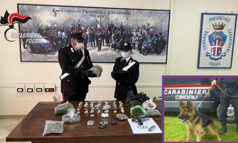 foggia blitz carabinieri