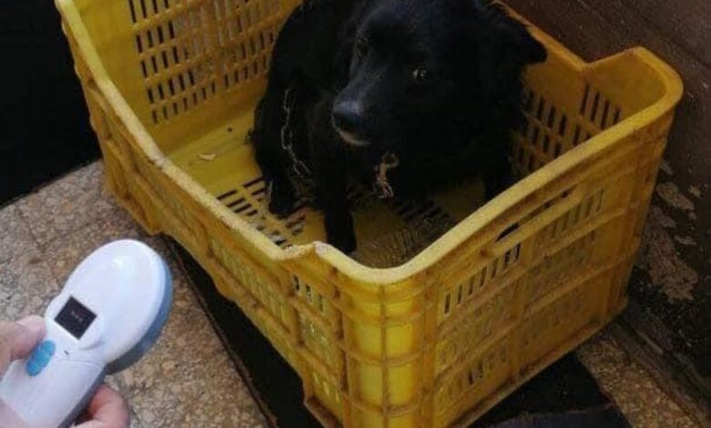 cane-sequestrato