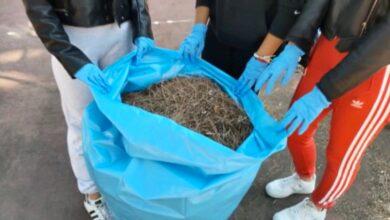 Photo of Foggia, docenti e alunni dell'Istituto Giannone-Masi si rimboccano le maniche per l'ambiente