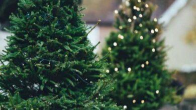 Photo of Foggia, Coldiretti dona alberi di Natale alle famiglie in difficoltà a causa del Covid