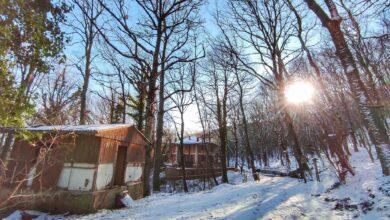 Photo of Neve sui Monti Dauni, che incanto il bosco di Faeto imbiancato: le foto fanno sognare