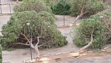"""Photo of """"Tanta fretta e gli alberi giacciono ancora a terra"""": il WWF Foggia chiede chiarimenti al sindaco di Vieste"""
