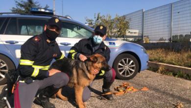 Photo of Cucciolo di Pastore Tedesco in difficoltà in Autostrada: la Polizia Autostradale di Foggia lo salva