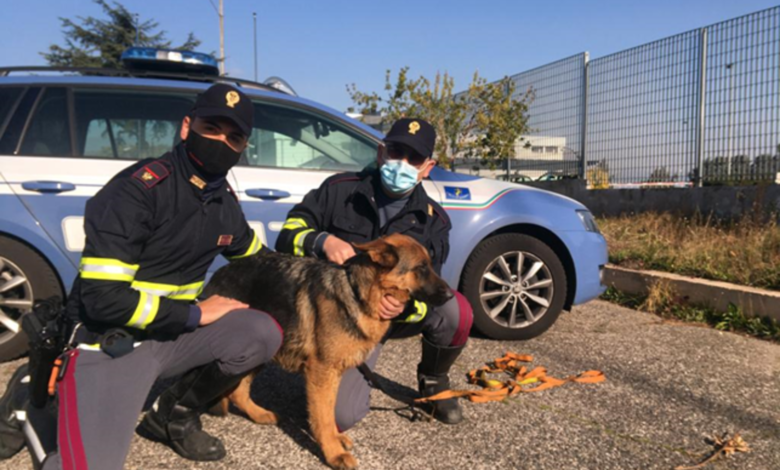 pastore tedesco polizia foggia