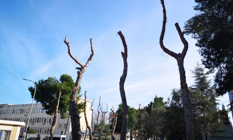riuniti alberi
