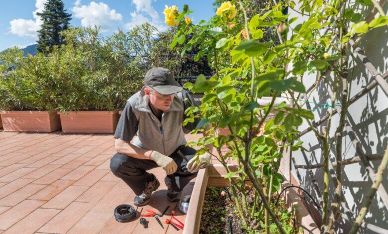 Photo of Irrigare il balcone: ecco come non fare seccare nessuna pianta