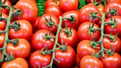 """Photo of Pomodoro da industria, aumento dei costi di produzione. Cia Capitanata: """"Serve intesa sul prezzo"""""""