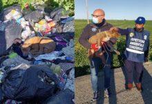 Photo of In una discarica di rifiuti a cielo aperto trovato e salvato cane investito da un pirata della strada