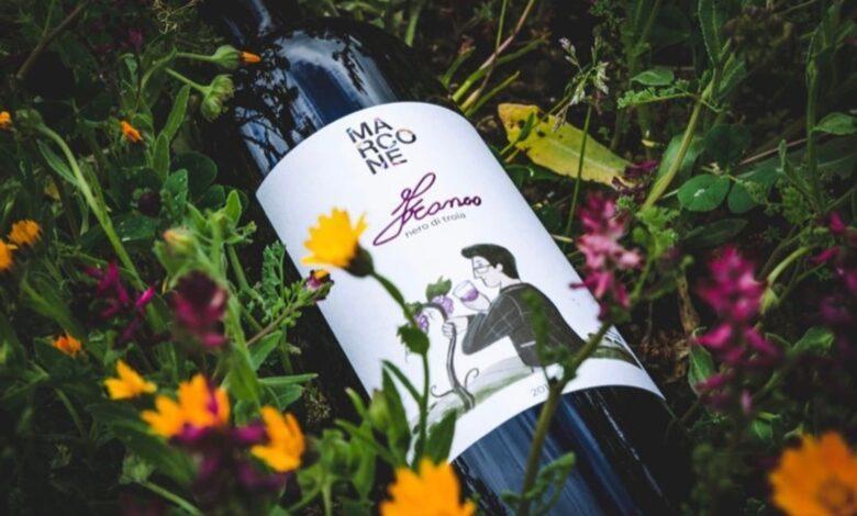 vino francesco marcone