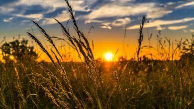 Photo of Puglia, è l'agricoltura il più grande datore di lavoro della regione