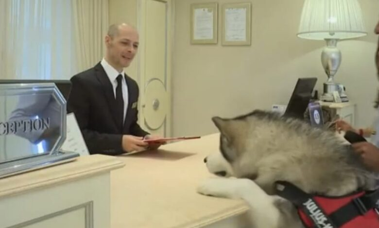 cani in albergo
