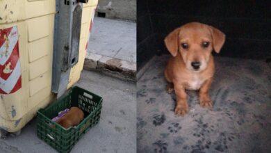 Photo of Vieste, cucciolo abbandonato in una cassetta per la frutta tra i bidoni della spazzatura