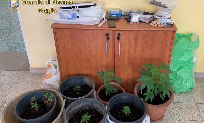 droga arresto commerciante gargano