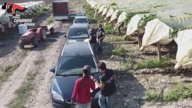 Photo of Braccianti sfruttati costretti a lavorare anche 14 ore al giorno: 5 aziende sottoposte a controllo giudiziario
