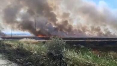 """Photo of Incendio nel Foggiano, bruciano 100 ettari di grano: """"Una vigliaccata inaudita. Come si fa a bruciare questa bellezza?"""""""