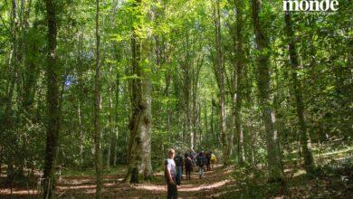 Photo of I cammini di Mònde 2021: passeggiata teatrale e possibilità di percorrere la Foresta in mountain bike