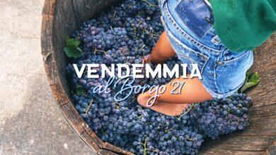 Photo of Vendemmia al Borgo, un momento di festa per grandi e piccoli a Borgo Turrito