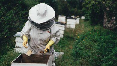 Photo of Il miele migliore di coriandolo si produce a Foggia, è quello dell'azienda Iannelli